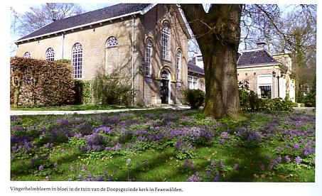 Stinzenplanten in Fryslân binnen