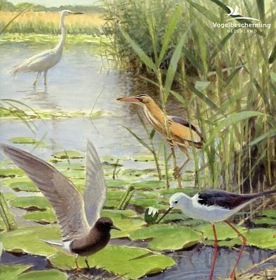 Kaarten Elwin vd Kolk vogels